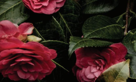Verdi's La Traviata – Portland Opera